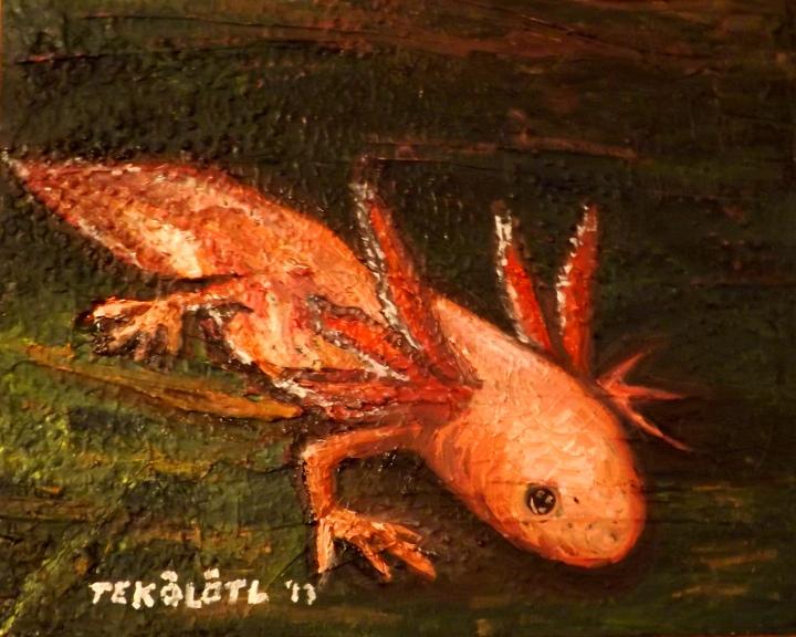 Axolotl (ajotole)