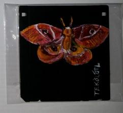 mariposa nocturna - papalotl